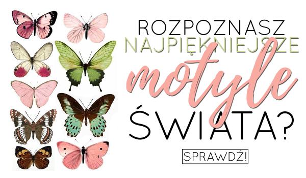 Czy rozpoznasz najpiękniejsze motyle świata?