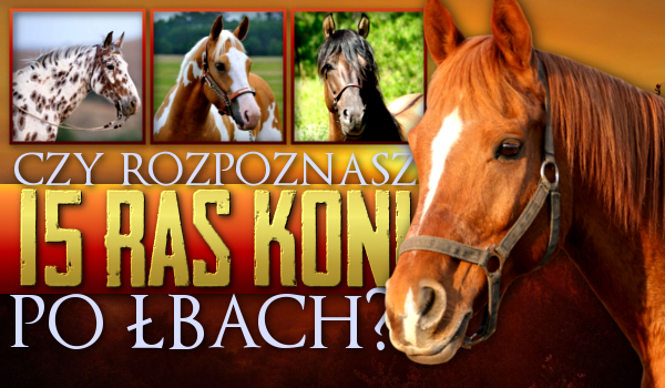 Czy rozpoznasz 15 ras koni po ich łbach?
