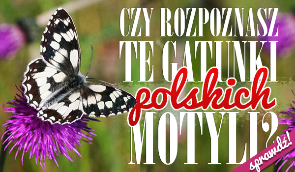 Czy rozpoznasz te gatunki polskich motyli?