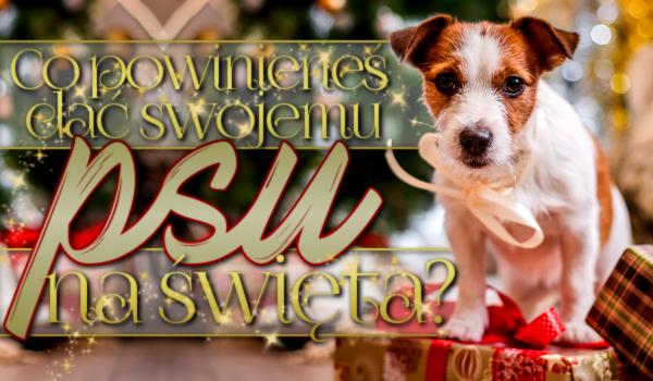 Co powinieneś dać swojemu psu na Święta?