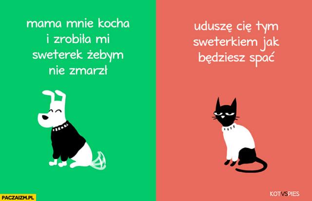 Memy Kot Vs Pies
