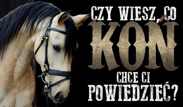 Czy wiesz, co koń chce Ci powiedzieć?