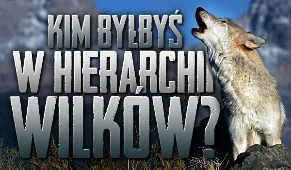 Kim byłbyś w hierarchii wilków?