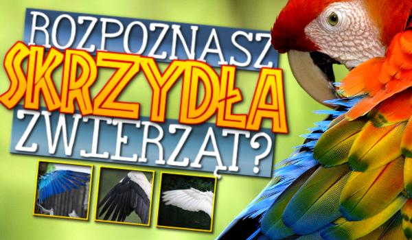 Rozpoznasz skrzydła zwierząt?