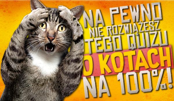 Na pewno NIE rozwiążesz tego quizu o kotach na 100%!