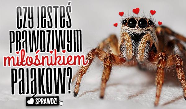 Czy jesteś prawdziwym miłośnikiem pająków?