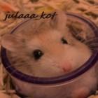 julaaa_kot