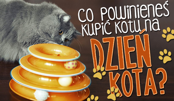 """Jaki prezent powinieneś sprawić swojemu kotowi na święto """"Dzień Kota""""?"""