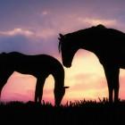 Melodyhorses