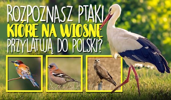 Rozpoznasz ptaki, które przylatują do Polski wiosną?