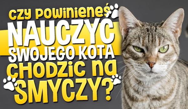 Czy powinieneś nauczyć swojego kota chodzić na smyczy?