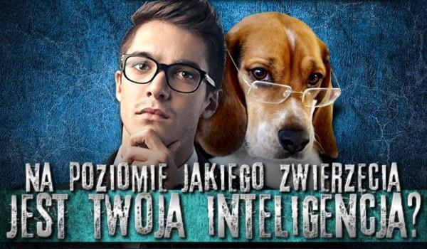 Na poziomie jakiego zwierzęcia jest Twoja inteligencja?