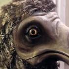 ptoki_dodo