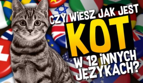 Czy wiesz jak jest kot w 12 innych językach?