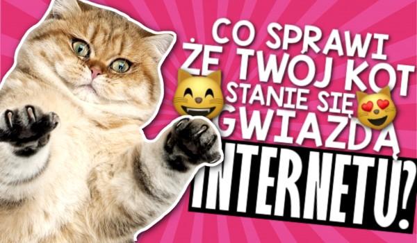Co sprawi, że Twój kot stanie się gwiazdą internetu?