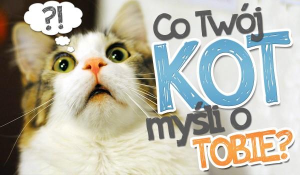 Co Twój kot myśli o Tobie?