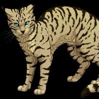 Czy Rozpoznasz Koty Z Klanu Pioruna Wojownicy