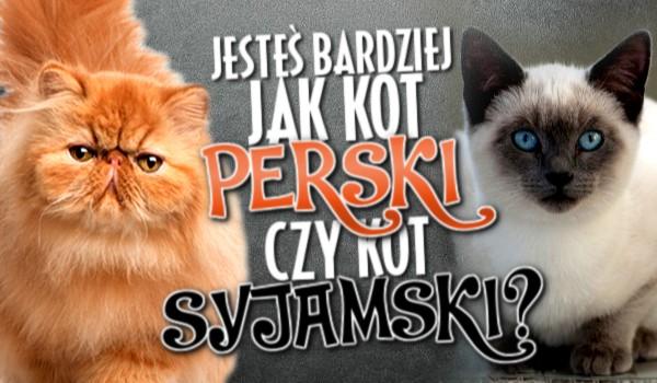 Jesteś bardziej jak kot perski czy syjamski?