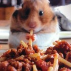 Spagetti_Hamster