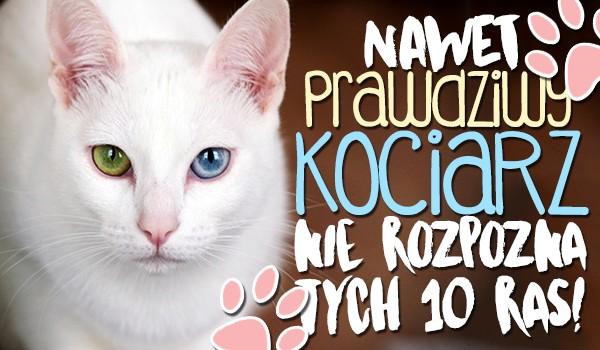 Założymy się, że nawet prawdziwy kociarz nie rozpozna tych 10 mało znanych ras kotów!
