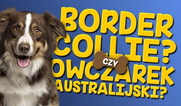 Border collie czy owczarek australijski?