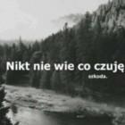 Panda_Olcia
