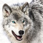 The_Wolf_Girl