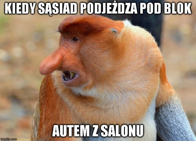 Memy 2 Janusz