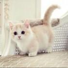 .Pink_Marshmallow_Kitty.