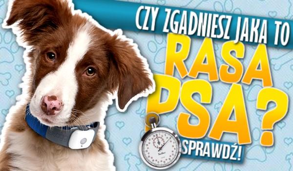 Zgadniesz, jaka to rasa psa? – Test na czas!
