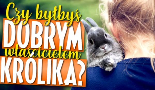 Czy byłbyś dobrym właścicielem królika?