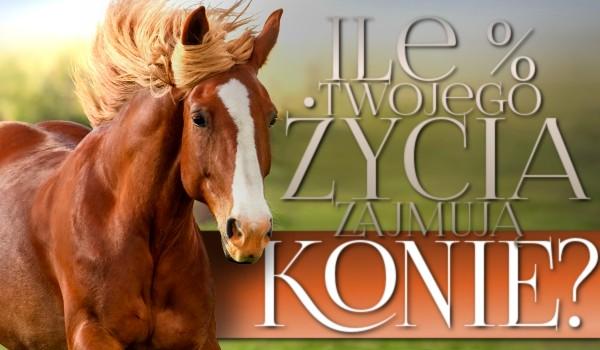 Ile procent Twojego życia zajmują konie?