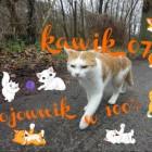kawik_07