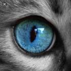 Cat_Woman