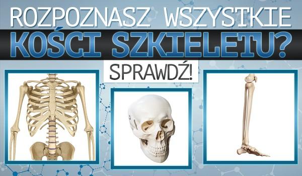 Czy rozpoznasz kości szkieletu?