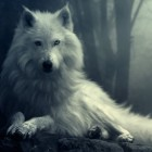 The-White-of-Wolf