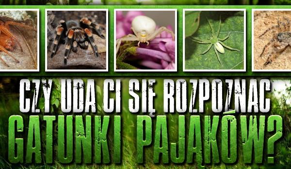 Czy uda Ci się rozpoznać gatunki pająków? Test na czas!