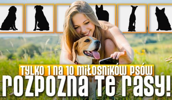 Tylko 1 na 10 miłośników psów rozpozna te rasy!