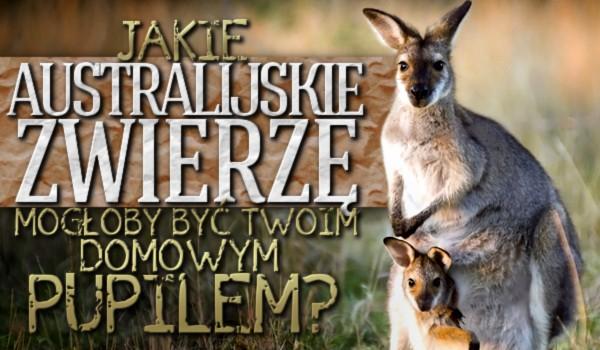 Jakie australijskie zwierzę mogłoby być Twoim domowym pupilem?