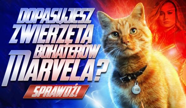 """Dopasujesz zwierzęta do bohaterów """"Marvela""""?"""