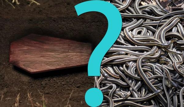 14 pytań z serii Co byś wolał? – kategoria Łatwa kasa!