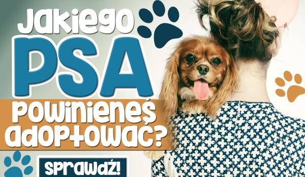 Jakiego psa powinieneś zaadoptować?
