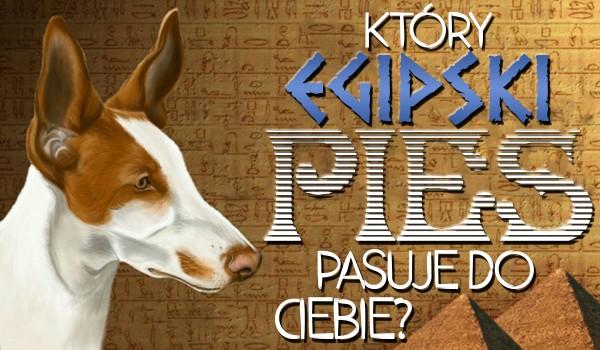 Który pies starożytnej rasy do Ciebie pasuje?