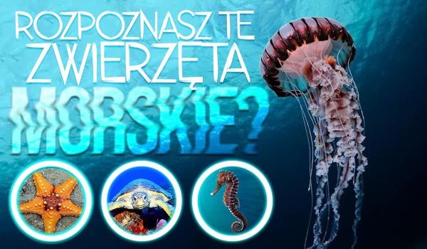 Czy rozpoznasz te zwierzęta morskie?