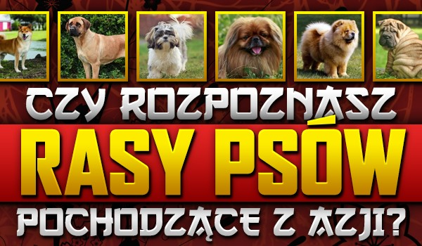 Czy rozpoznasz rasy psów pochodzące z Azji?