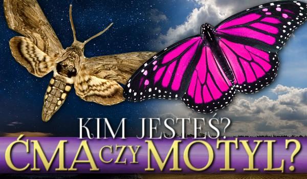 Ćma czy motyl? Kim jesteś?
