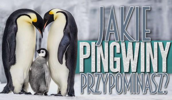 Jakie pingwiny przypominasz?