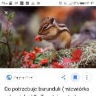Kocham_wiewiorki