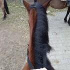 Fantasia_Horse