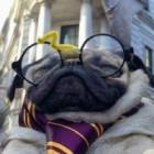 Profesor-Mops